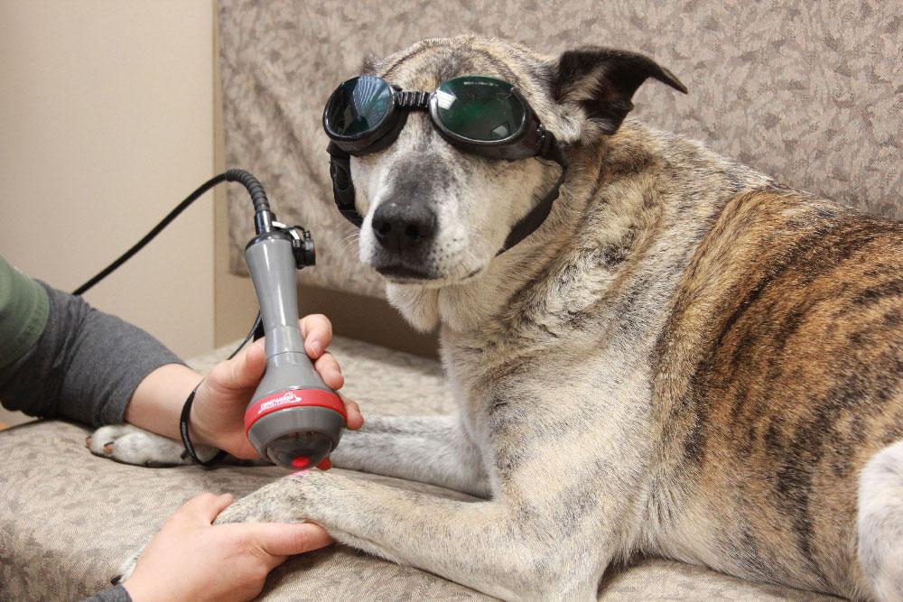 Laser Therapy | Companion